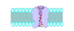 hydrogen-bonds2